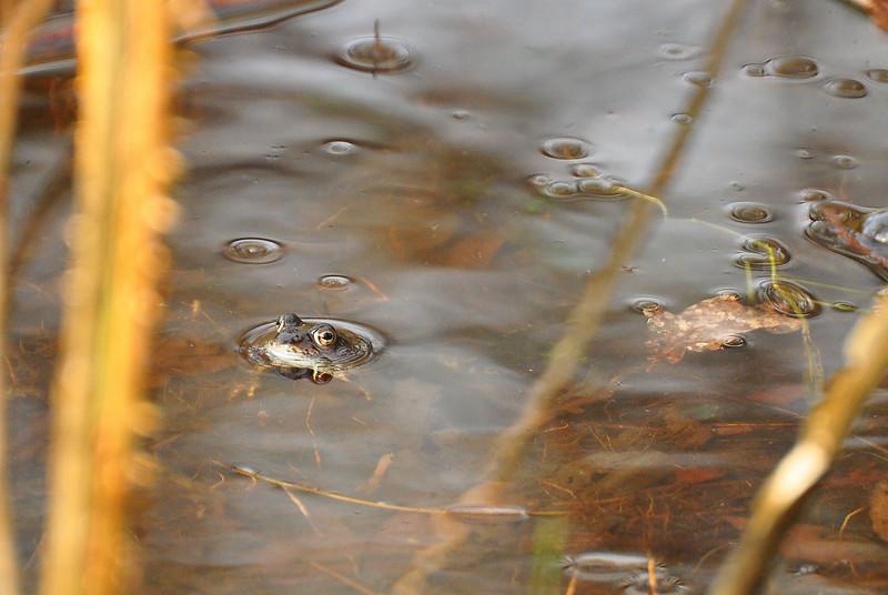 Frog and raindrops.