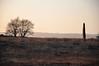 Standing stone, Machrie moor.