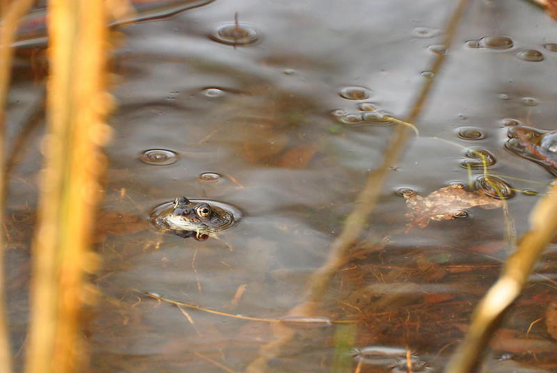 Lone frog.