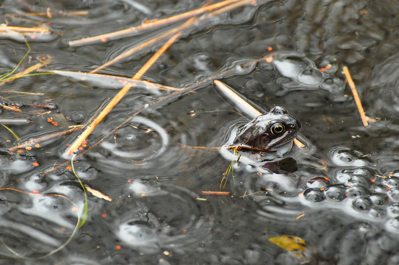Frog and spawn.