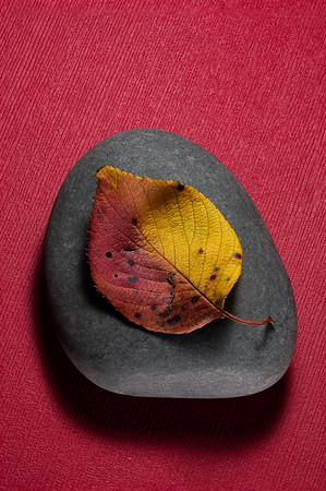 Autumn Leaf on River Stone