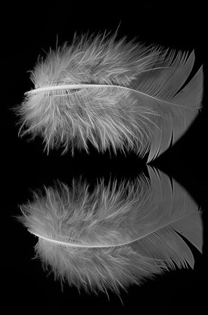 Feather with the Funky Form