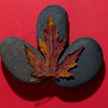 Maple Leaf On River Stones