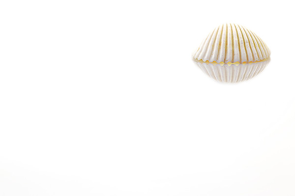 White Shell On White