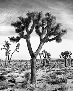 Desertland