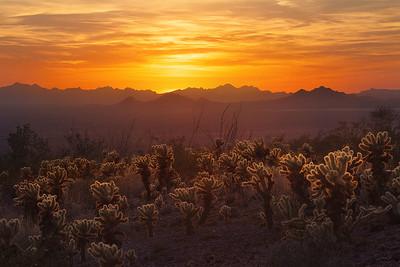 Deserts peace
