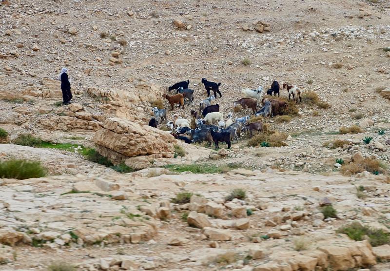 Bedouin Adventure 001
