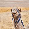 Bedouin Adventure 014