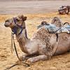 Bedouin Adventure 013