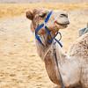 Bedouin Adventure 015