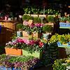 Carmel Market, TA 012