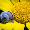 Snail on Flower, Beit Guvrin