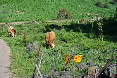 Golan Heights Area