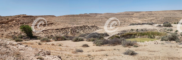 Bor Hemet Cistern and Atlantic Pistacio Tree in the Negev in Israel