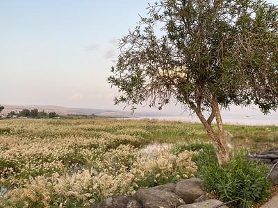 Israel-iPhone11-102