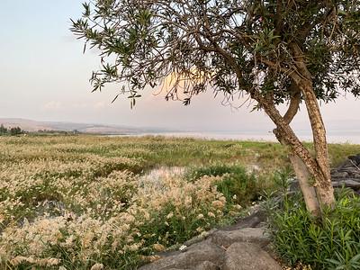 Israel-iPhone11-103