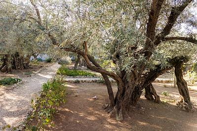 Israel-SonyCamera-203