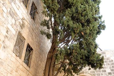 Israel-SonyCamera-210