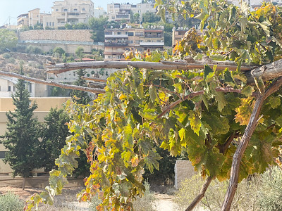 Israel-iPhone11-066