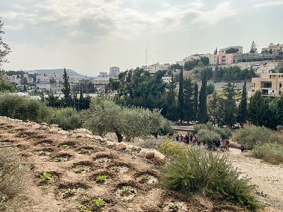 Israel-iPhone11-068