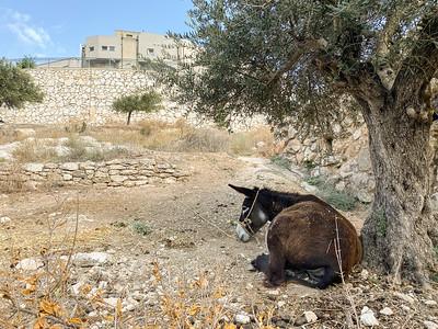 Israel-iPhone11-071