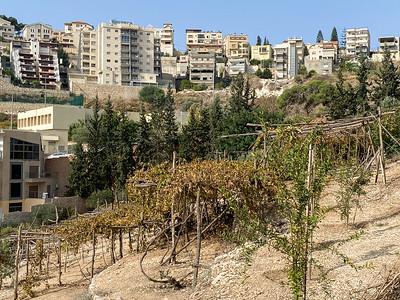 Israel-iPhone11-067
