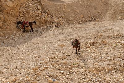 Israel-SonyCamera-346