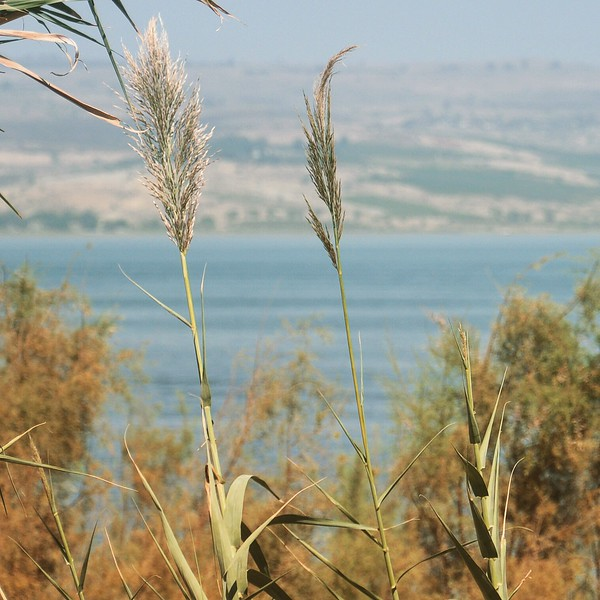 The Sea of Galilee. 2016