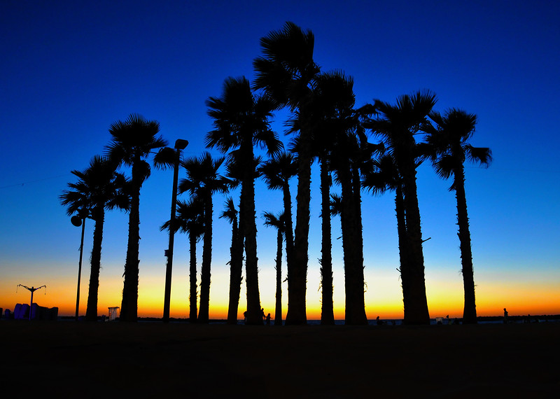Palm trees at sunset in Tel Aviv. 2016.
