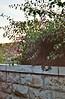 Gethsemane Bouganvilla
