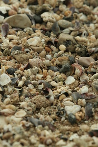 The stones and shells of the beach at Bustan Ha Galil