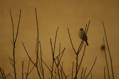 A bird sitting on a branch