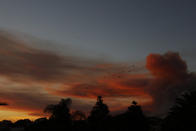 A year later - birds fleeing the smoke in the Carmel mountain seen Daliat el Carmel