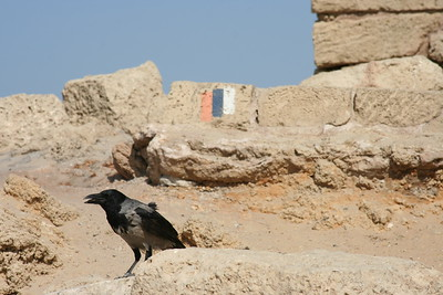 Crow 3 Bar