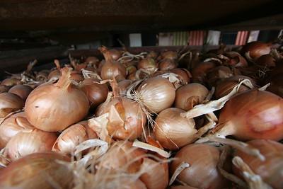 onion crates 3