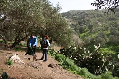 El Al River - Olives