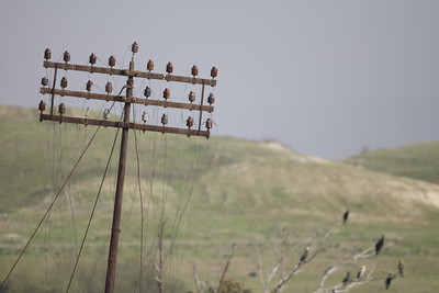 Electricity pole at Shaarayim