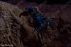 קטלן עב זנב, Androctonus crassicauda.