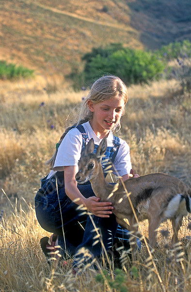 Mountain Gazelle (Gazella gazella gazella)- צבי ארץ ישראלי