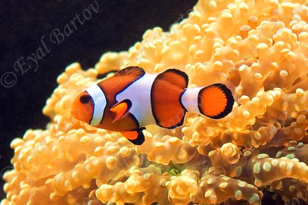 Fish -דגים
