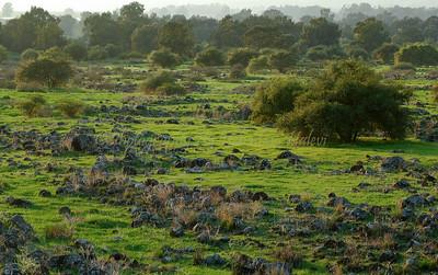 Kinneret Shoreline 130