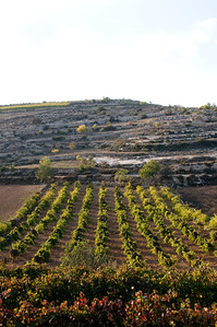 Efrat Wadi Fall 08-013