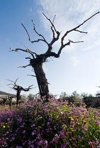 Efrat Wadi Spring 09 - 156