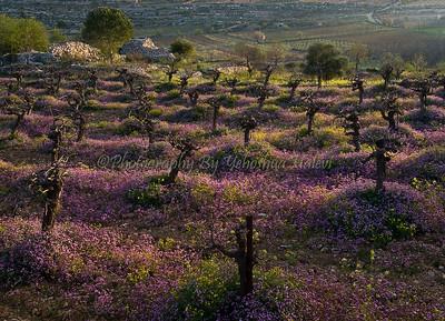 Efrat Wadi Spring 09 - 007 13x 18