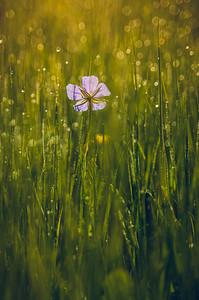 YHalevi-Israel Wildflowers 2018-11