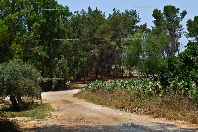 Forest Ben Shemen II