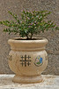 Jerusalem Cross on Flower Pot