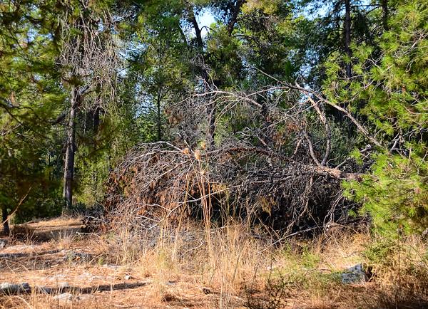 Forest windbreak II