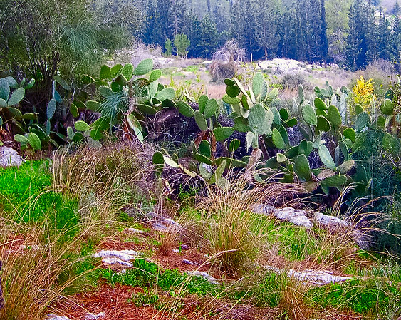 Israeli forest