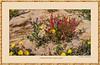 A Desert Garden in the Negev, Israel the Beautiful #8